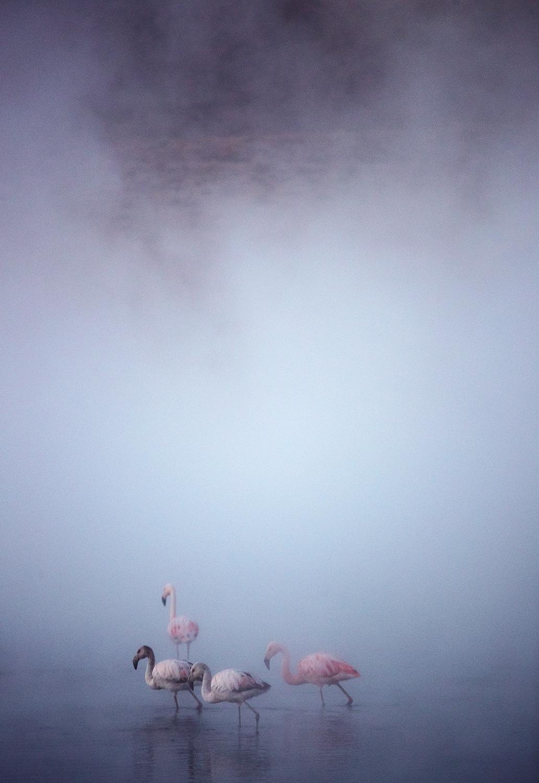 Der Atem der Erde – Paradiese aus heißem Wasser und vulkanischen Formen. Über den Nationalparks Isluga und Lauca nach Bolivien. Kapitel 14 (04.07. – 08.07.)